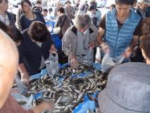 10/12(土)松浦お魚祭り開催決定!
